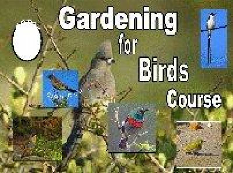 Gardening for Birds Course - by Mariana Delport