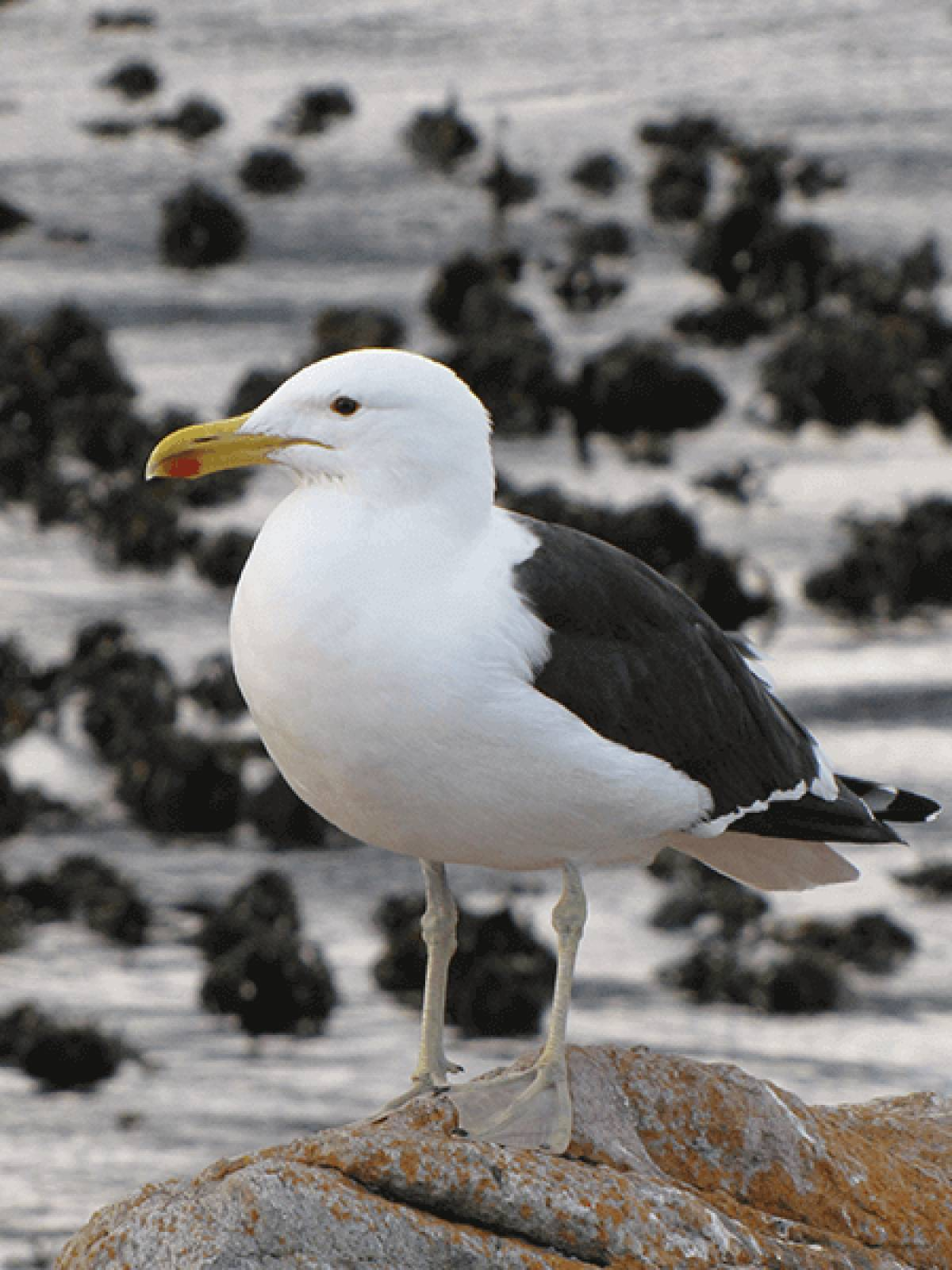 Pelagics (Sea Birds) Tours